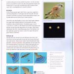 Screendump van een pagina uit lesboek Symbiose.